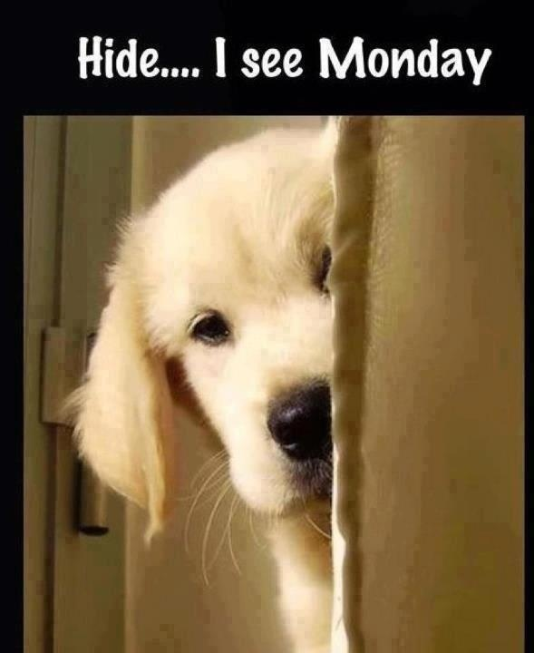 Funny Monday Quote With Cute Dog Puppy... For More Funnies And Hilarious  Joke