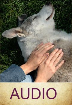 Fantastic site with a wealth of information regarding providing Reiki to animals
