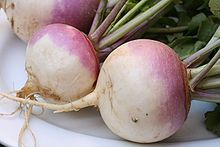 Turnip or white turnip is a root vegetable commonly grown in temperate climates worldwide for its white, bulbous taproot. Small, tender varieties are grown for human consumption, while larger varieties are grown as feed for livestock.