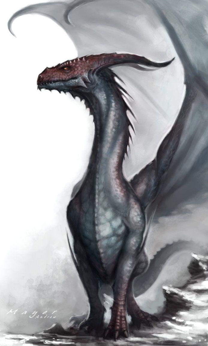 Dragon by Andimayer on deviantART