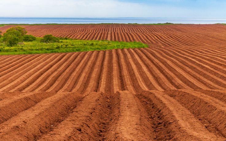 Potatoe Rows by Ron MacKay on 500px