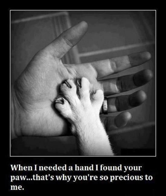 When I needed a hand I found your paw . . . that's why you're so precious to me.