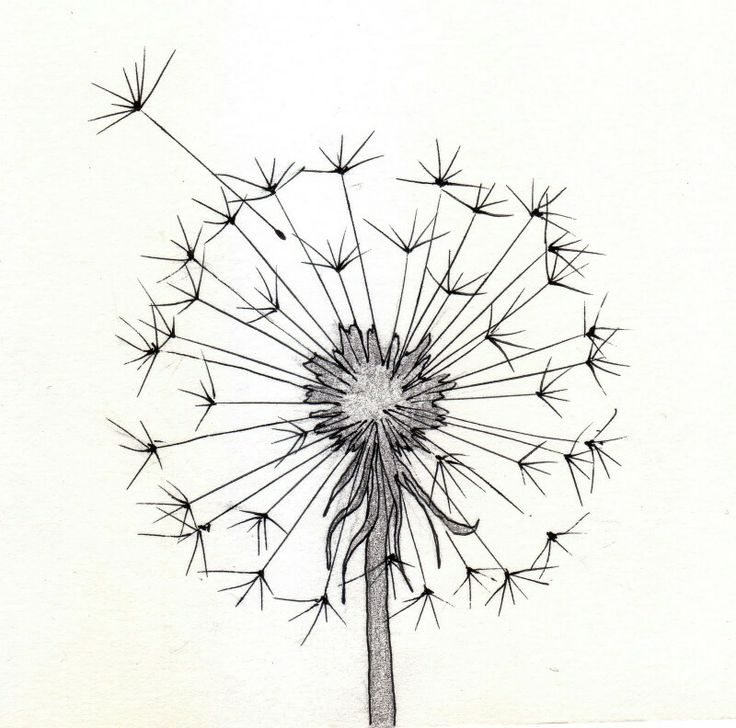 dandelion make a wish pinterest dandelions