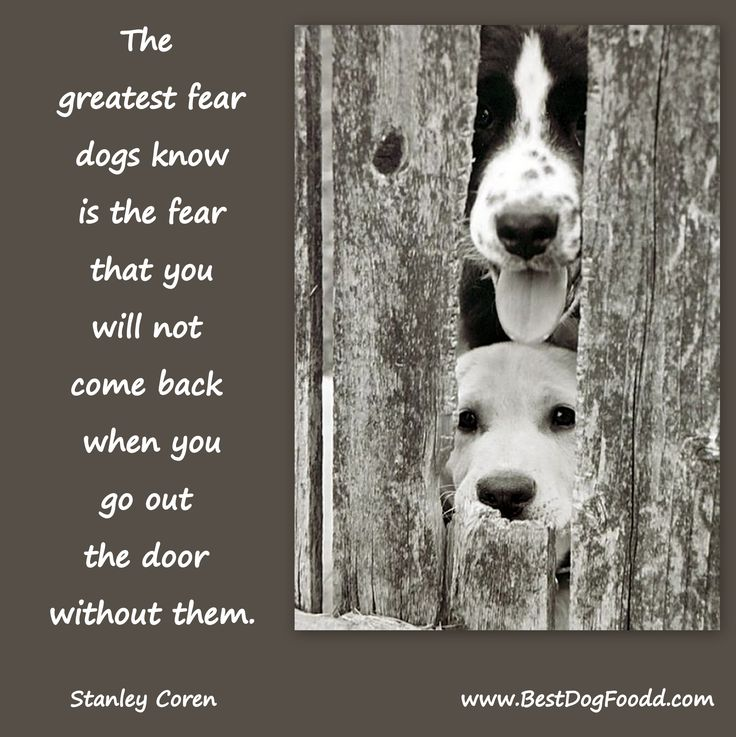 More pawsome #dogquotes at: http://www.bestdogfoodd.com/....especially a rescue dog that has spent the first part of his/her life all alone.
