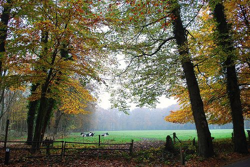 Veluwe, Netherlands. Not really a garden, but it brings back wonderful memories.