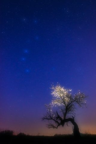 Daróczi Csaba fotója : A fa csillagképe