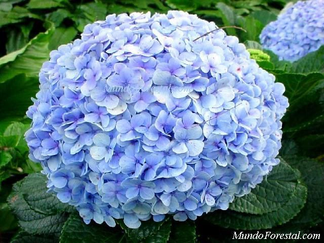 Plantas ornamentales de naturaleza for 20 plantas ornamentales