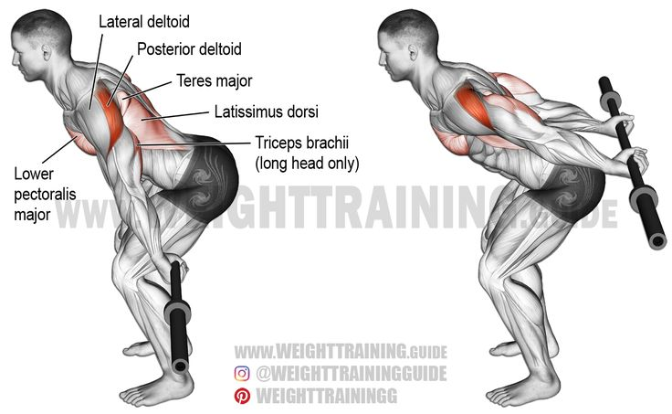 Bent-over barbell reverse raise. An isolation exercise. Target muscle: Posterior Deltoid. Synergists: Latissimus Dorsi, Teres Major, Lower (Sternal) Pectoralis Major, and Triceps Brachii (long head only). NOTE: The synergists are involved only up to the point of where your upper arms are directly by the side of your body. Beyond that point (shoulder hyperextension), only your posterior deltoid is involved.