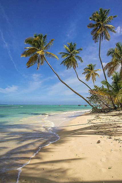 ~~Pigeon Point Beach, Tobago ~ palm trees and an ocean breeze, Republic of Trinidad and Tobago by pedro lastra~~