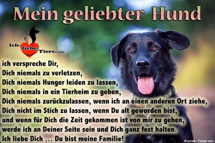 Mein geliebter Hund ich verspreche Dir, Dich niemals zu verletzen, Dich niemals Hunger leiden zu lassen, Dich niemals in ein Tierheim zu geben, Dich niemals zurückzulassen, wenn ich an einen anderen Ort ziehe, Dich nicht im Stich zu lassen, wenn Du alt geworden bist, und wenn für Dich die Zeit gekommen ist von mir zu gehen, werde ich an Deiner Seite sein und Dich ganz fest halten. Ich liebe Dich … Du bist meine Familie! >> http://www.ich-liebe-tiere.com/ <<