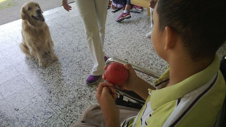 Centro de Actividades y terapias asistidas con animales de Cali, Colombia