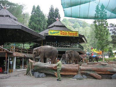 Taman Safari Restaurant, near where the elephants eats.