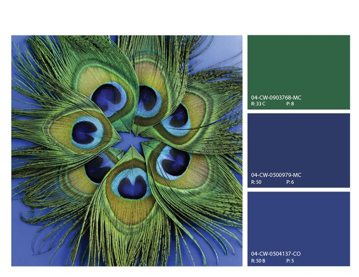 Peacock Color Scheme Blue And Green Color Scheme Blues