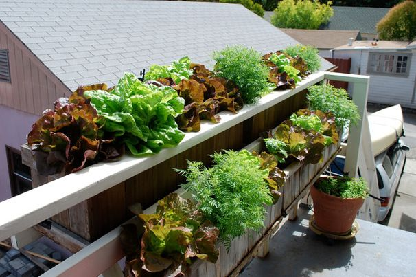 Lettuce grown in window boxes. Eclectic Deck by Steve Masley Consulting and Design
