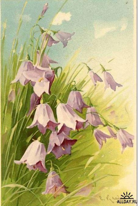 Открытки колокольчики цветы