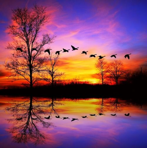 Reflection of Birds flying in the Sunset