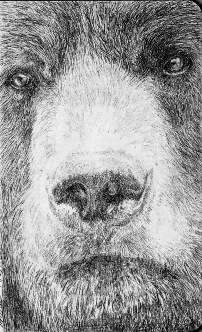 Bear by *Atarial on deviantART