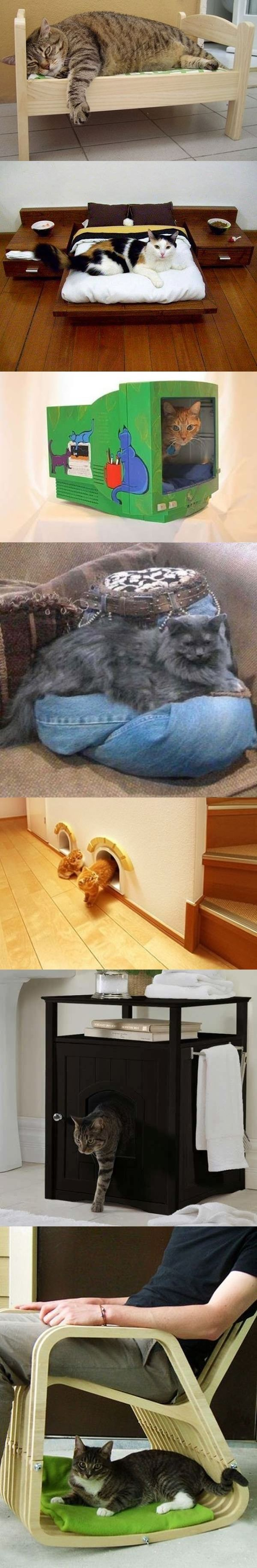 Cats need furniture too