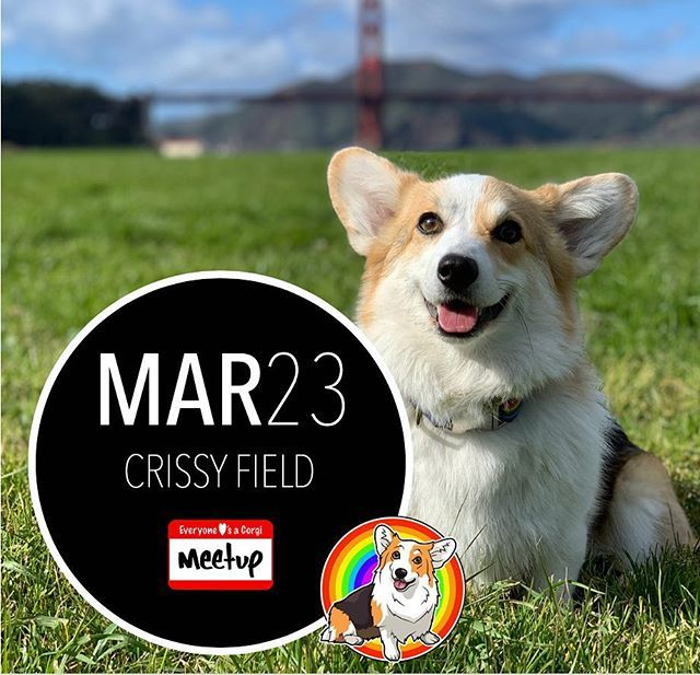 Crissy On The Greens Come Hang With The Corgs Next Month Rsvp On