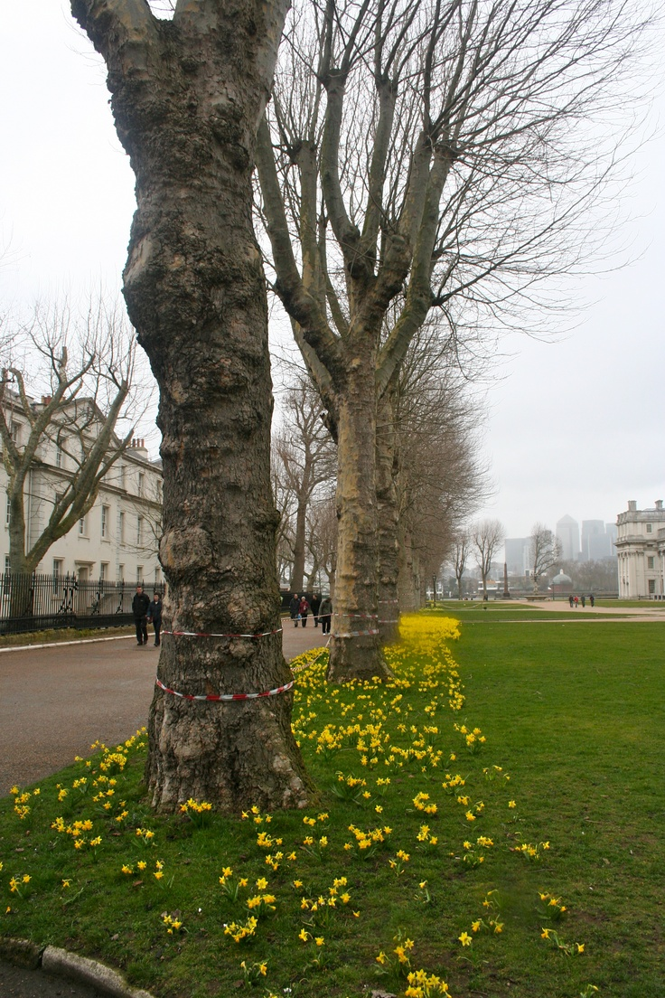 Spring time at the Old Royal Naval College #greenwich