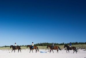 Horse riding trails along the Baltic Sea coast