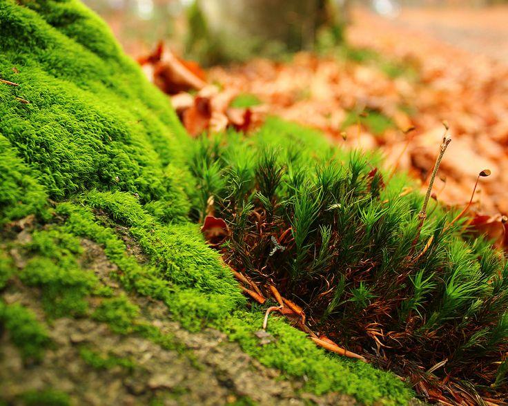 http://www.wallpaperfx.com/nature/plants/amazing-moss-wallpaper-14124.htm