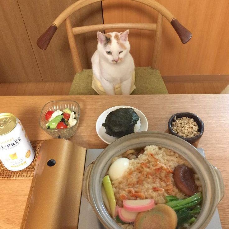 😉 寒いよ…寒すぎるよ そんな日は、大好きな🍙と鍋焼きうどんで暖ったマルよ₍˄·͈༝·͈˄₎ฅ˒˒ . #おにぎりアクション #onigiriaction . 煮込みすぎ  #鍋焼きうどん  ゆで玉子派 #優しいマルちゃんママ  #ウィンク#暮らし #猫 #cat #おうちごはん #猫との暮らし#サントリー #ノンアル #夕食 #japan #eclatcat #ペコねこ部 .