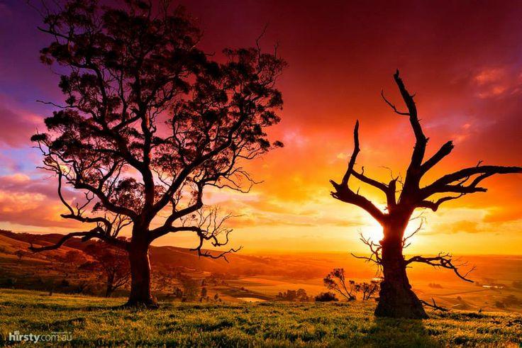 Beautiful Barossa Valley at #sunset,