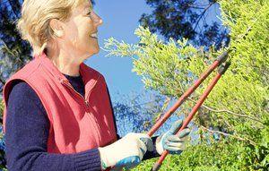 10 gode råd til haven i november