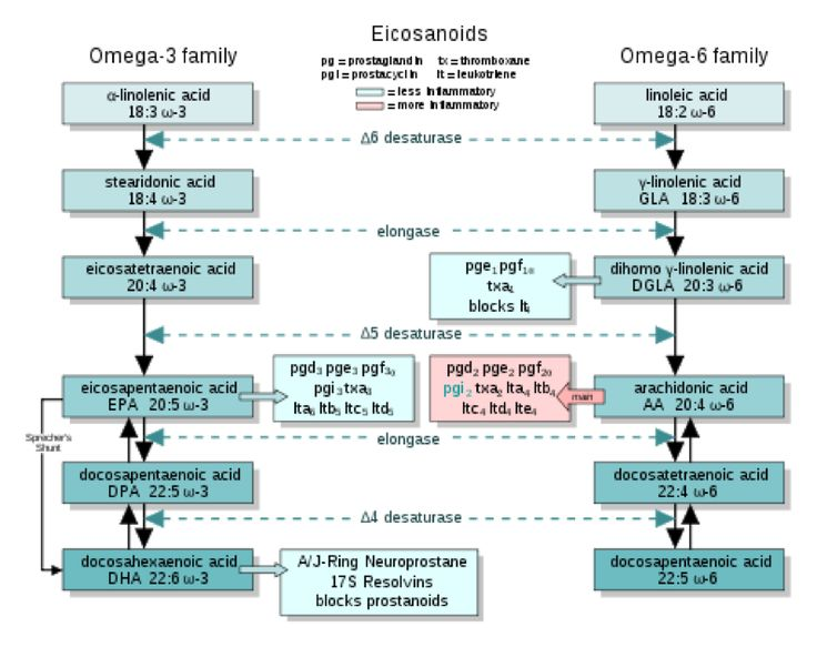 Essential Fatty Acid Metabolism Why fish stomps flax as a source of omega-3 ALA, EPA, DHA - their roles and importance