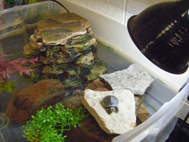 Loving Life Science ... Miss A's Biology Blog-50 gallon rubbermaid stock tank idea