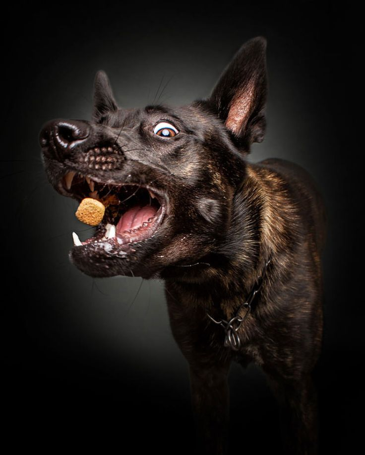 The hilarious face dogs make when they try to catch treats