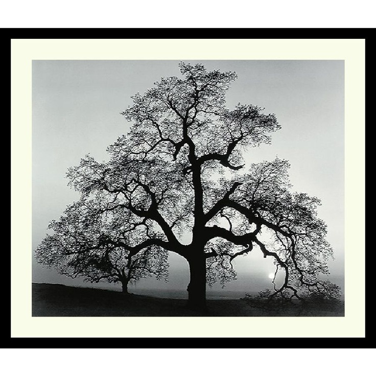 ansel adams photo - reminds me of the old oak tree by the police station in Folsom...
