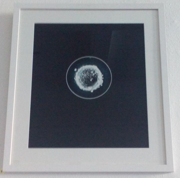 Macrocosm, 2015, Photogram (1 of 1), lllford Classic Matt Fibre Based Paper, by Kate-Bowe O'Brien, €150