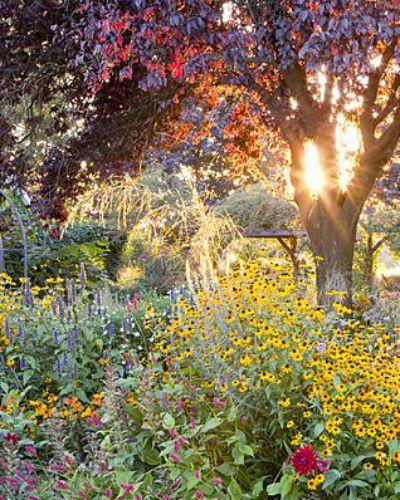 145 best images about tuin garden terras idea 39 s op pinterest tuinen viburnum opulus en - Kleuren die zich vermengen met de blauwe ...