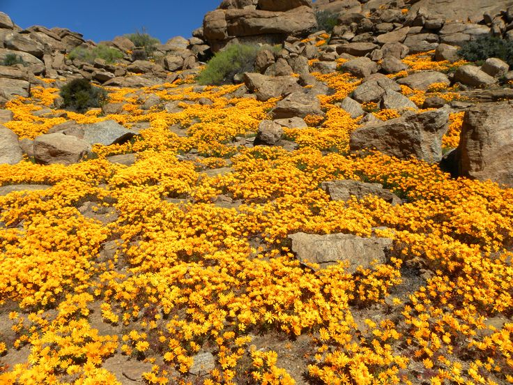 Wild flowers in South Africa