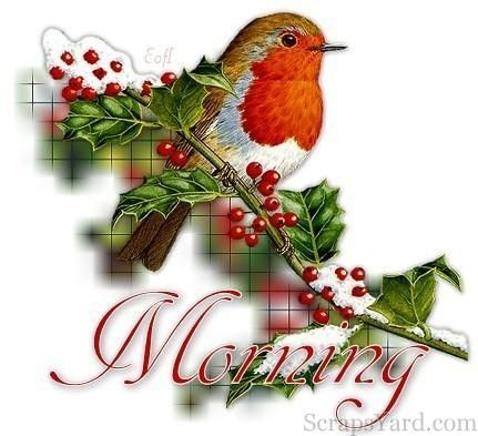 Good morning wishes with beautiful bird | Christmas good