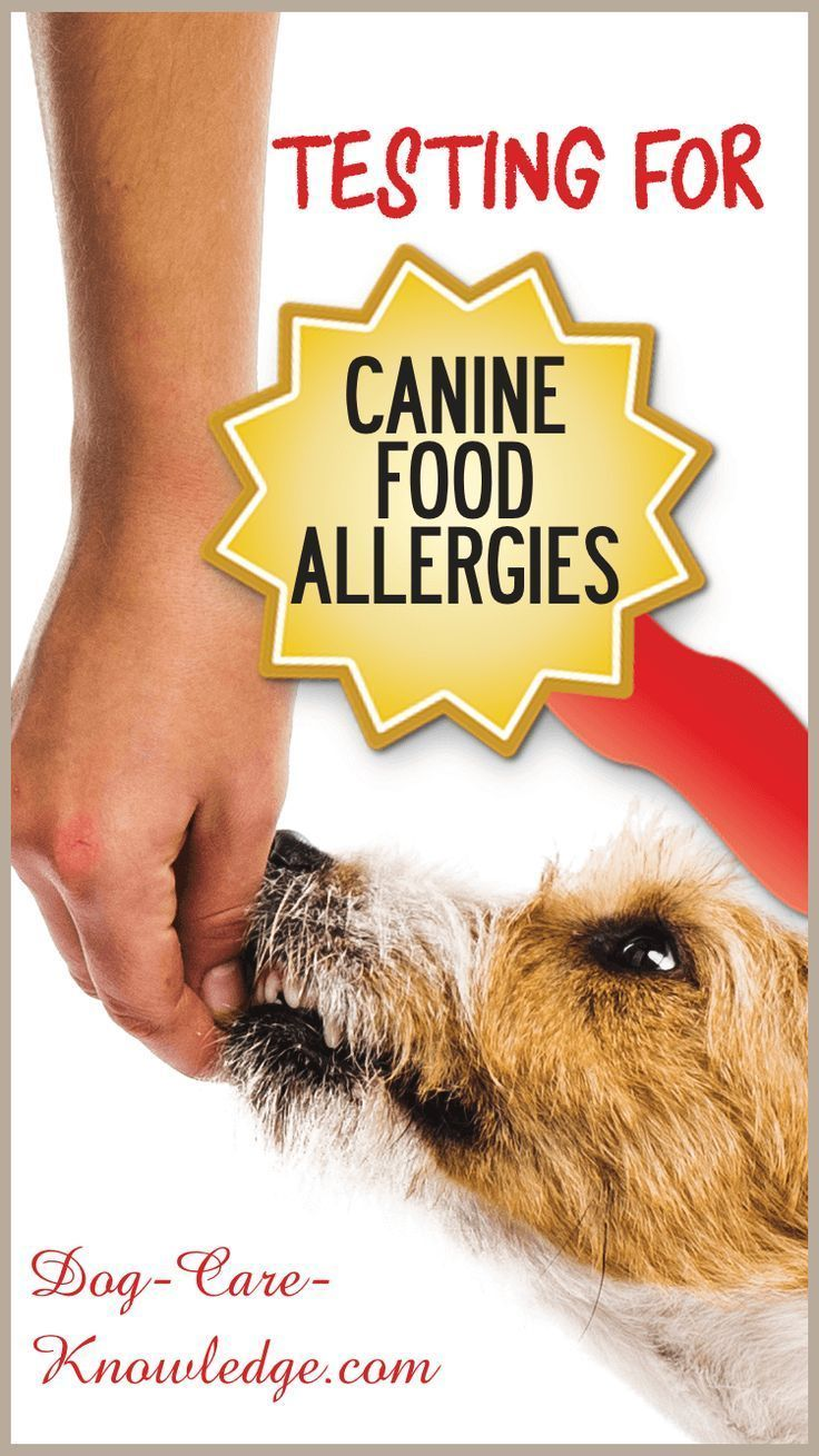 Canine Food Allergies Or Intolerance What You Need To Know