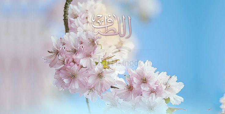 Воистину Он – #Аллах Проницательный, Добрый.. #ислам  #islamkingdom
