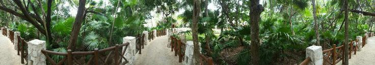 Iberostar paraiso del mar every path is carved out like this so cool ♡