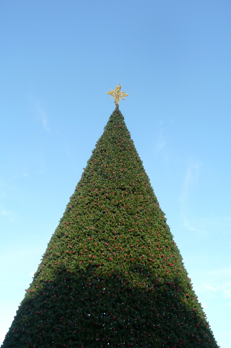 23 Best Images About Christmas In Delray On Pinterest