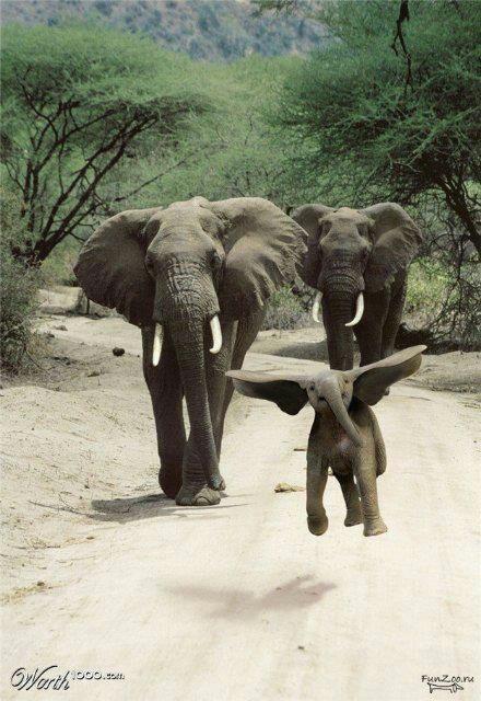 Flying baby elephant!!! Nooooo - Photoshop!!!   Pinterest ...