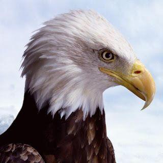 Seguramente te has preguntado si el mito de la renovación del águila es real o sólo una bonita historia para motivarte.
