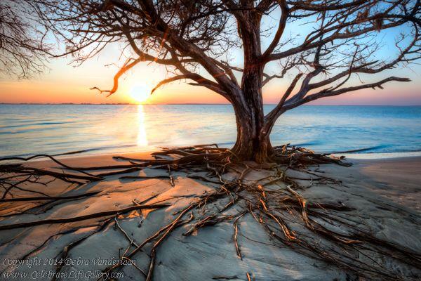 RootsBeach, Jekyll Island, GA