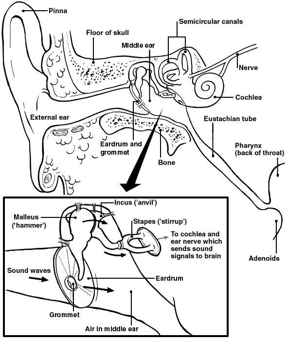Acc anatomy assessment test