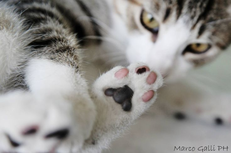 © copyright Marco Galli. Con Gatto Poldo. Galli Marco il fotografo dei gatti. CLICCA QUI https://www.facebook.com/ilgatto72?ref_type=bookmark
