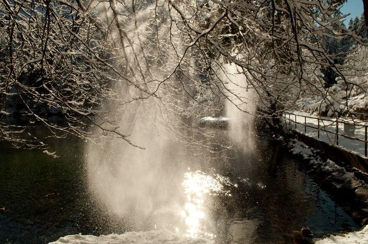 Wenn die Sonne kurz nach dem Schneefall auf die Bäume fällt ...