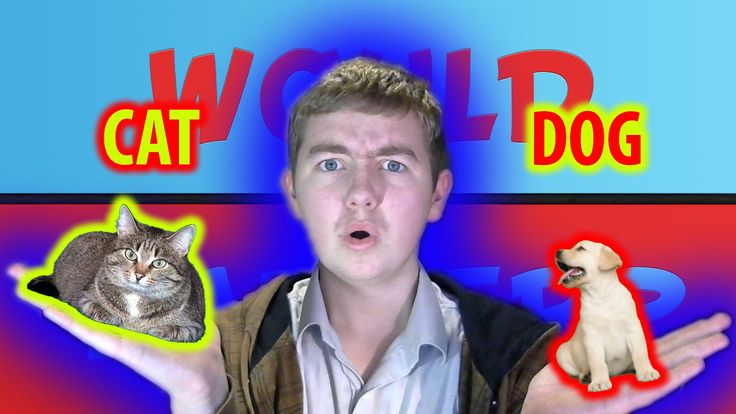 Cat or Dog - Would You Rather
