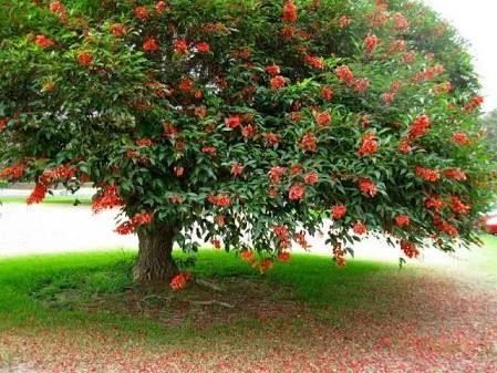 arboles - Buscar con Google