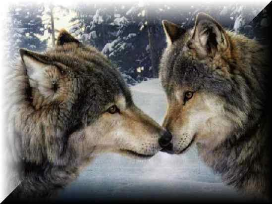 online clothing market size Wolf and Girl in Love   Love Wolves